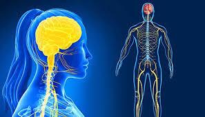 Alleanze biofarmaceutiche: la nuove frontiere per curare il sistema nervoso centrale
