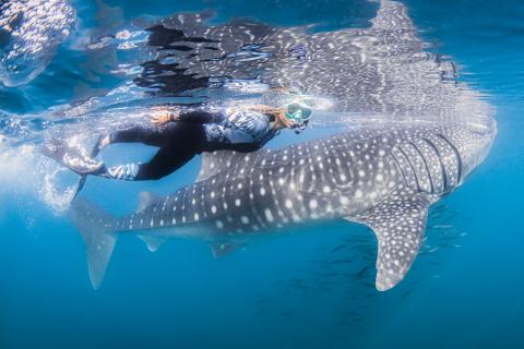 Sport acquatici, ora anche le mute sono ecosostenibili