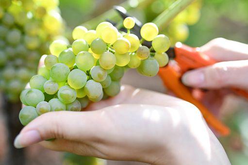 La Lombardia lancia Riccagioia Agri 5.0, l'hub dell'innovazione in agricoltura
