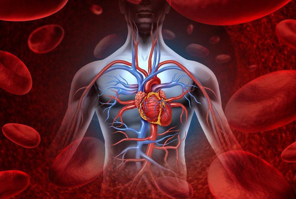 """Malattie cardiovascolari in aumento: dopo il Covid ripartire con educazione e prevenzione. I dati nel Documento """"Prevenzione Italia 2021"""""""