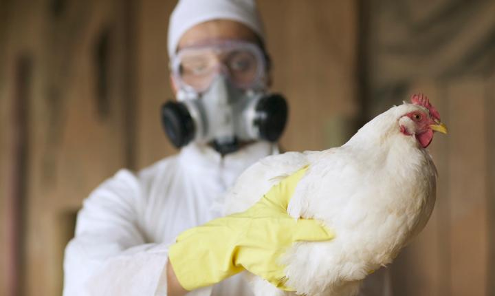 """Influenza aviaria, Simit: """"Si monitorano con cautela i casi in Russia. Nessun allarme, ma crescente attenzione"""""""