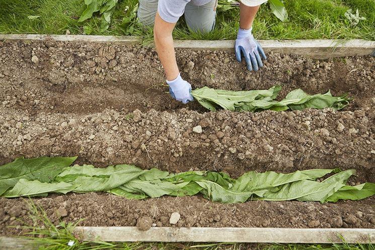 """Accademia nazionale di agricoltura: """"Coltivazione biodinamica senza fondamento scientifico"""""""