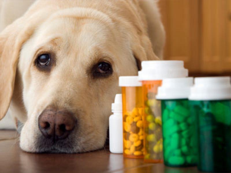 Sviluppo di nuovi prodotti ad uso veterinario, maxi intesa da 30 milioni di dollari