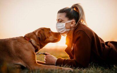 GekkoVet Oy: il mio cane ha il coronavirus, la colangite o la tosse dei canili?