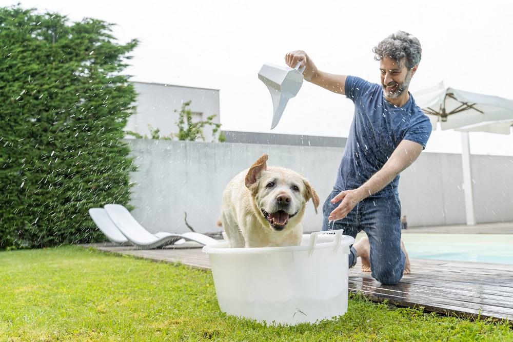 Ozobox, è italiano il brevetto che depura l'acqua con tecnologie green