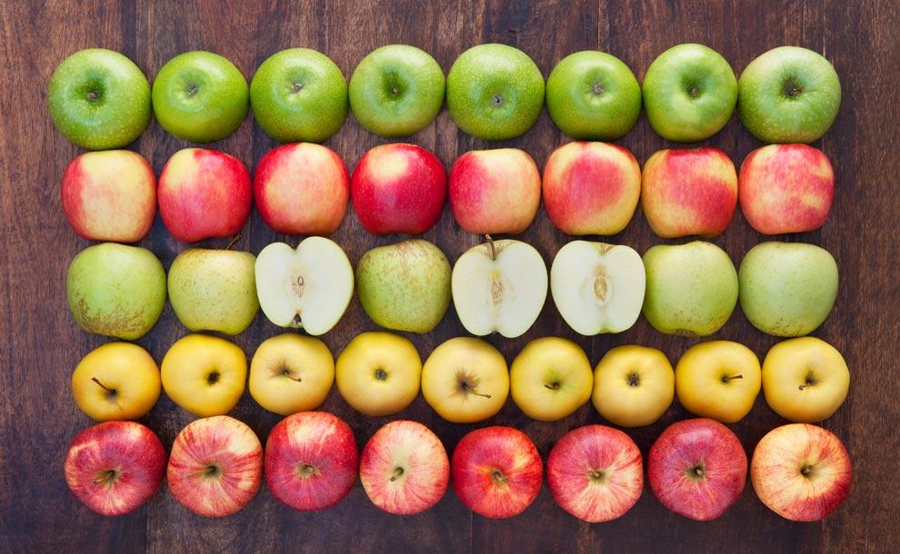 """I benefici della mela al centro del quinto incontro de """"I mercoledì dell'Archiginnasio"""""""